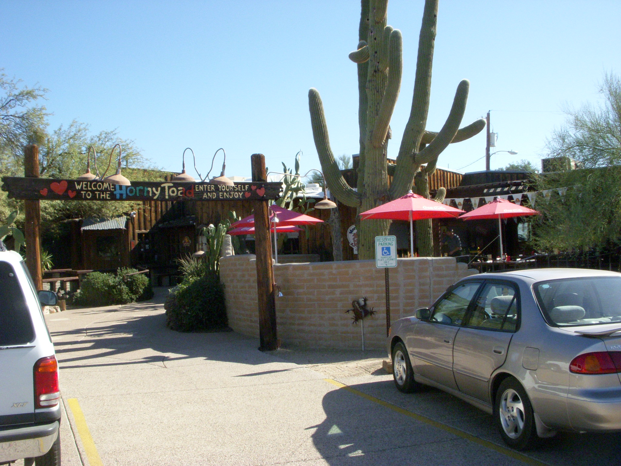 A view of the Horny Toad's patio and parking lot with a large saguaro on the property.
