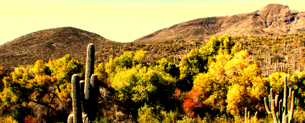 Green Cave Creek